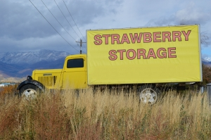 Strawberry Storage